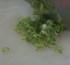 Come tagliare il cipollotto